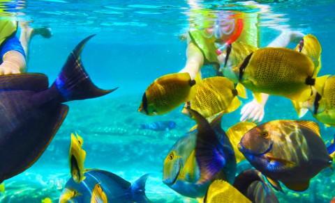 Tropical Fish at Hanauma Bay